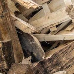 Altholz A1 entsorgen