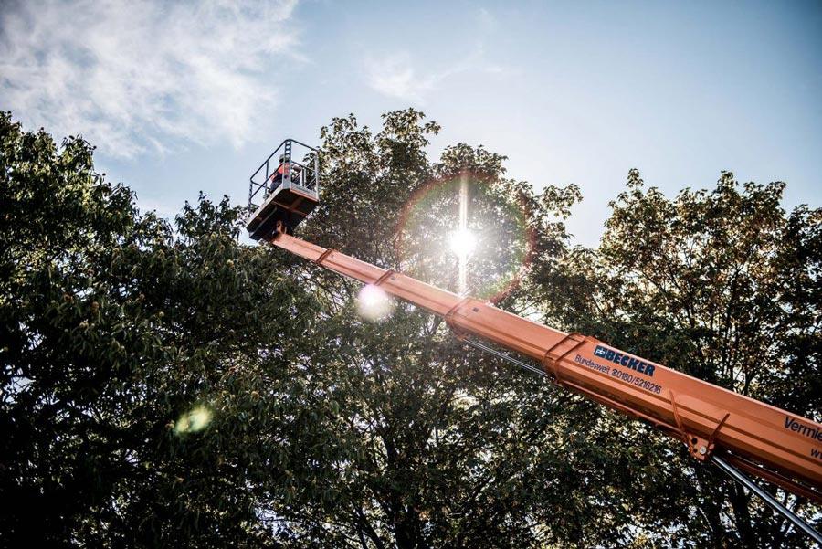 Arbeitsbühnen für Baumkronenschnitt